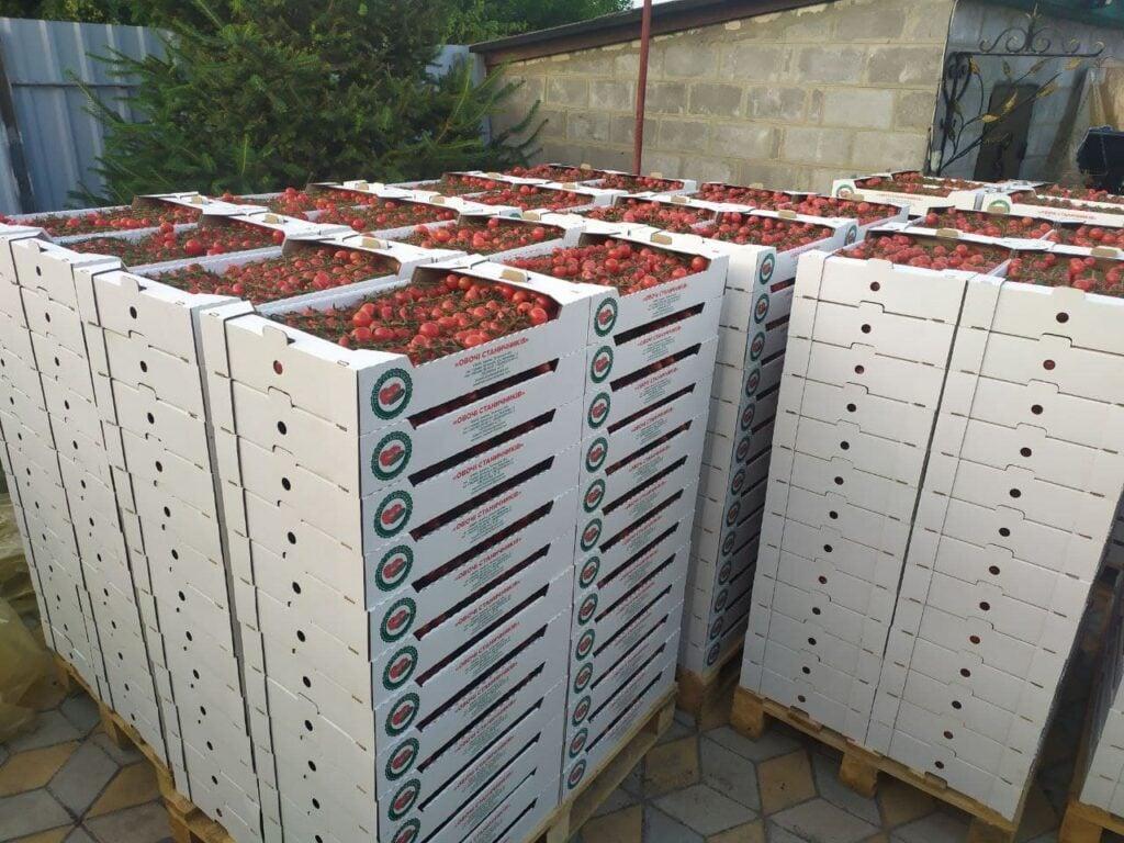 От Станицы до столицы. Как овощеводы прифронтовой Луганщины покоряют рынки Украины